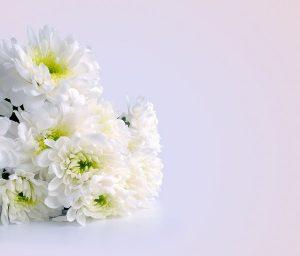 お彼岸 花 種類1