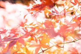 紅葉 種類 時期1